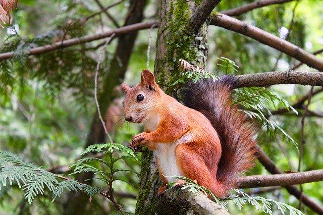 eichhörnchen loswerden