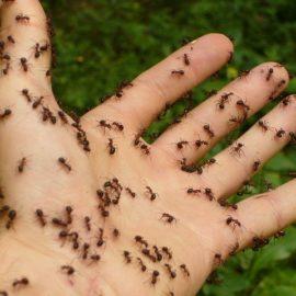 Ameisen vertreiben – diese Tipps werden Ihnen helfen!