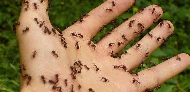 Ameisen vertreiben