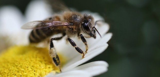Bienen vertreiben