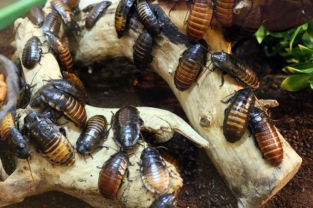 Kakerlaken vertreiben