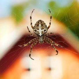 Mittel gegen Spinnen