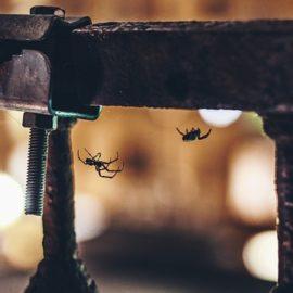 So vertreiben Sie Spinnen aus Ihrem Haus