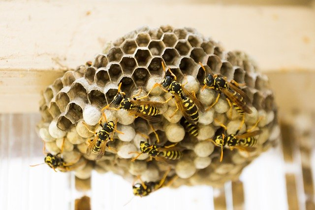 Wespen vertrieben