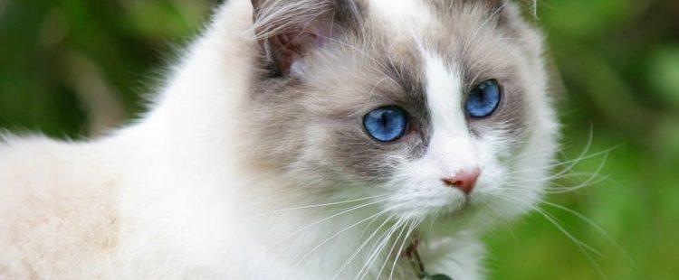 was hilft gegen katzen