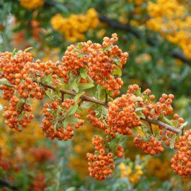 Pflanzen gegen Katzen. Der große Katzenabwehr -Pflanzenguide