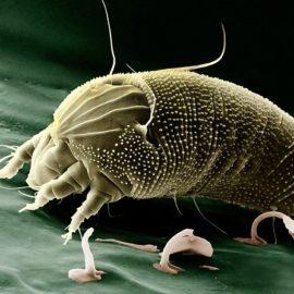 Was tun gegen Milben und Hausstaubmilbenallergie? (Ratgeber)
