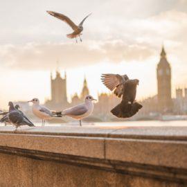 Spikes zur Vogelabwehr! – Welche Spikes gegen Vögel?