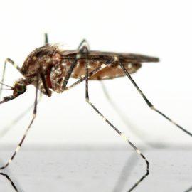 spannrahmen insektenschutz